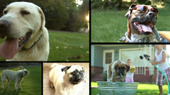 Dogs, Video Montage Stock Footage