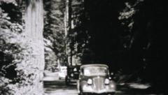 Cars Driving Through Redwood Forest-1940 Vintage 8mm film Stock Footage