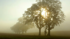Fog moves through trees at sunrise, timelapse Stock Footage