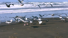 Seagulls at beach fly in slow motion Stock Footage