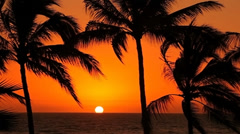 Tropical palm trees sway in wind at sunset - stock footage