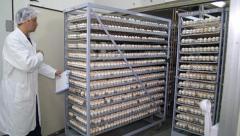 Farm Chicken Eggs Stock Footage