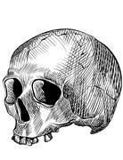 Engraved human skull - stock illustration