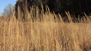 Stock Video Footage of Dry grass in the autumn, Sunny day