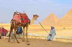 Egypt. Giza. Camel near the pyramids - stock photo