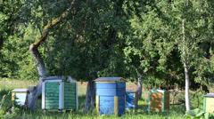Colorful bee hives under fruit trees in rural garden. Beekeeping Stock Footage