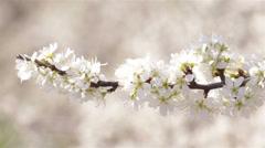 Shrubs Flowering Detail Stock Footage