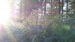 White frost time lapse Stock Footage