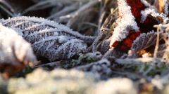 Frozen leaves on grass - stock footage