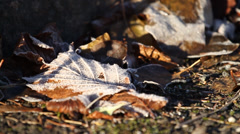 Frozen leaves on tarmac - stock footage