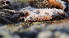 Frozen leaf - stock footage