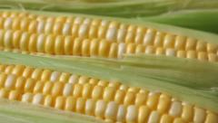 Fresh corn on the cob - stock footage