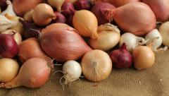 Fly over background of onions and shallots Stock Footage