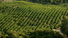 Aerial shot of agriculture & orchards - stock footage