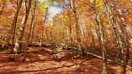 Stock Video Footage of falling leaves forest in golden autumn