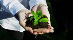 Green shoots environmental business concept in nature. Corporate businessmen and Stock Footage