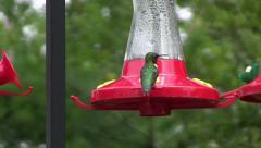 Hummingbird at Feeder - stock footage