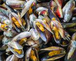 Stock Photo of sea mussel background