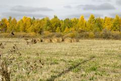 golden autumn in western siberia, landscapes and sketches. - stock photo