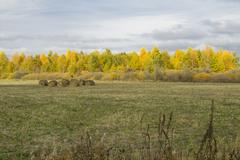 Golden autumn in western siberia, landscapes and sketches. Stock Photos