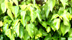 Nature Leaf raindrop 2 Stock Footage