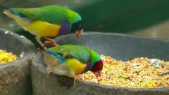 Birds eating Stock Footage