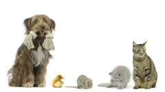 group of pets sitting - stock footage