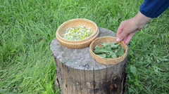Herbalist hand put dish with mint balm plant and camomile flower Stock Footage