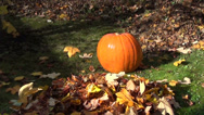 Stock Video Footage of pumpkin garden leaf fall