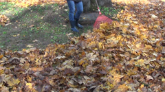 Girl raking thick coat dry leaves Stock Footage