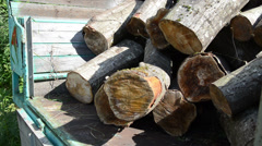 Closeup of trailer and worker load tree logs for firewood - stock footage