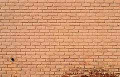 Painted Brick Wall with Water Spout Stock Photos