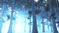 Stock Video Footage of Deep Winter Forest 3 snowing