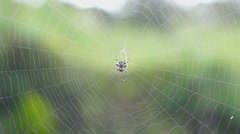 A spider sitting in a cobweb - stock footage