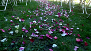 Stock Video Footage of Rose petals laid down the aisle on Wedding day