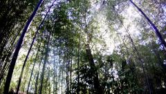Time lapse sun bamboo amazing beauty cutaway transition motivation outdoors Stock Footage
