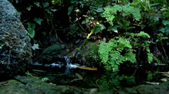 Waterfall in a tropical rainforest nature beauty green water outdoors cutaway Stock Footage