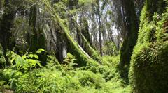 Jungle trees Stock Footage