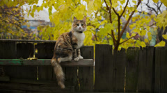 Cat on Fence Stock Footage