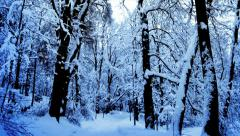 snow falling in a forest - stock footage