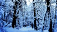 Stock Video Footage of snow falling in a forest