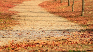 Stock Video Footage of Autumn leaves are flying down the road.