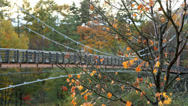 Stock Video Footage of Autumn maple with a suspension bridge in the background.