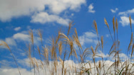 Stock Video Footage of Dry autumn grass with moving clouds in the background.
