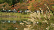 Cars on the shore of the lake. Stock Footage