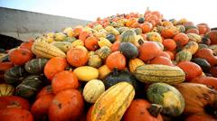 Pumpkins Stock Footage