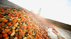 over production of pumpkins - stock footage