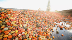 food over production of pumpkins - stock footage