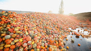 Stock Video Footage of food over production of pumpkins