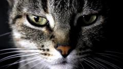 Portrait of a cat Stock Footage